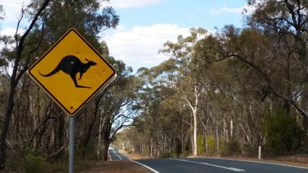 Avoiding Kangaroos