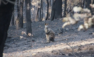Wildlife Emergencies During Fire